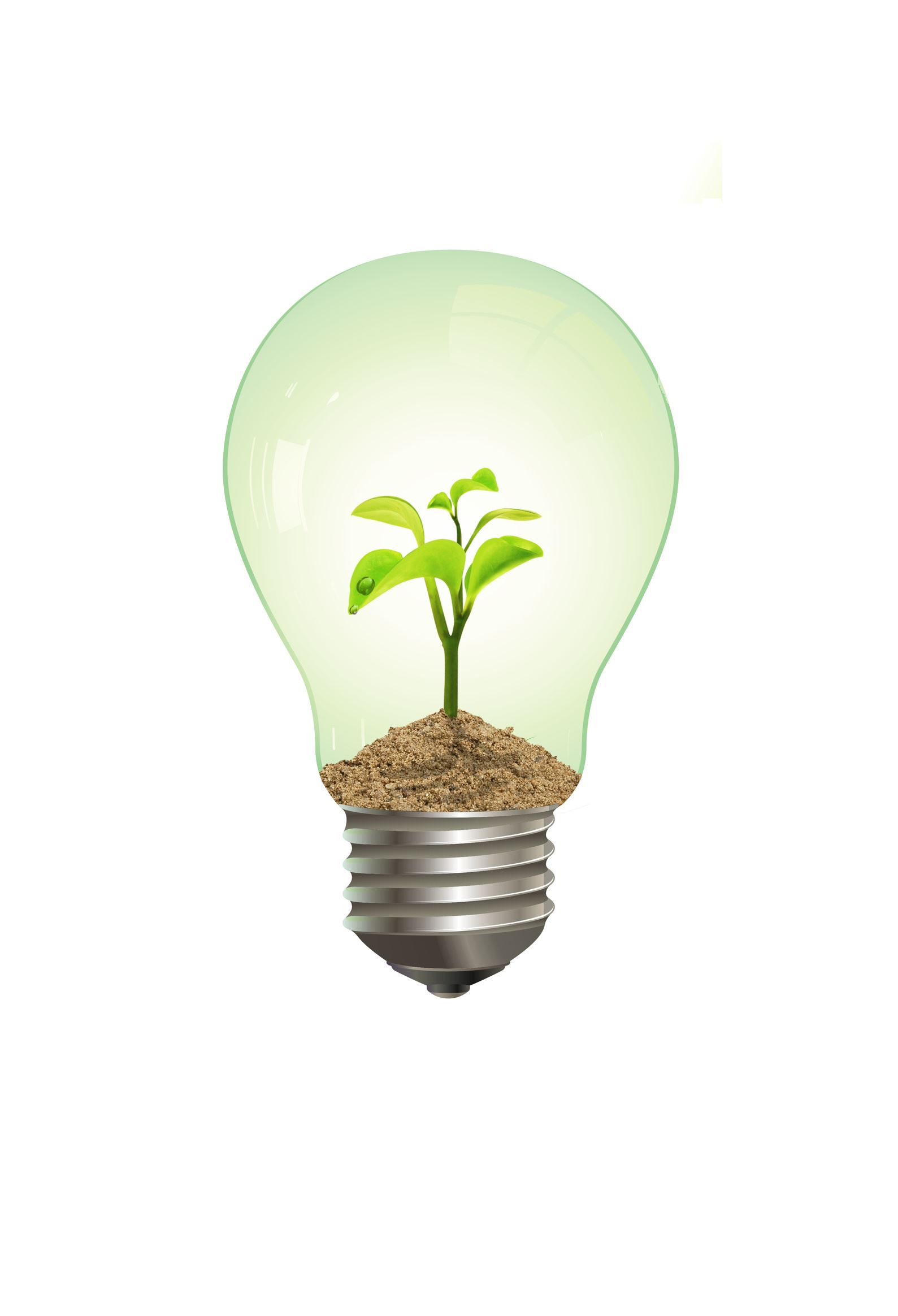 going green plant in lighbulb